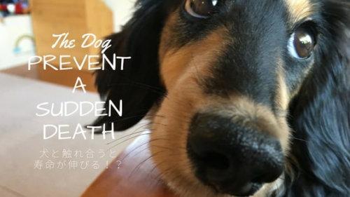 犬が突然死のリスクを軽減する!愛情ホルモン「オキシトシン」と幸せホルモン「セロトニン」で生活クオ...