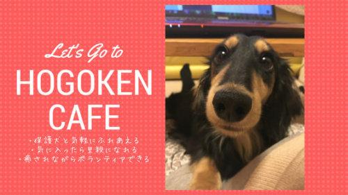 保護犬カフェで気軽に犬とふれあおう!「買う」のではなく「里親になる」という選択