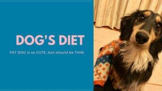 dog-diet