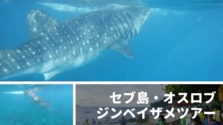 cebu-whale-shark-tour