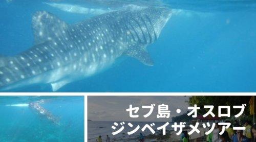 セブ島・オスロブでジンベイザメと泳ぐ!おすすめツアーをレビュー|料金・移動時間・感想