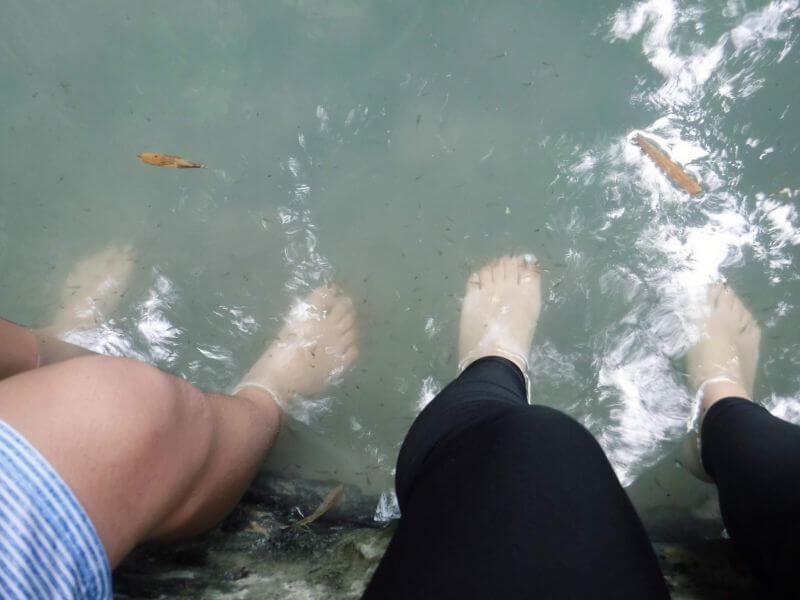 ツマログ滝のドクターフィッシュ