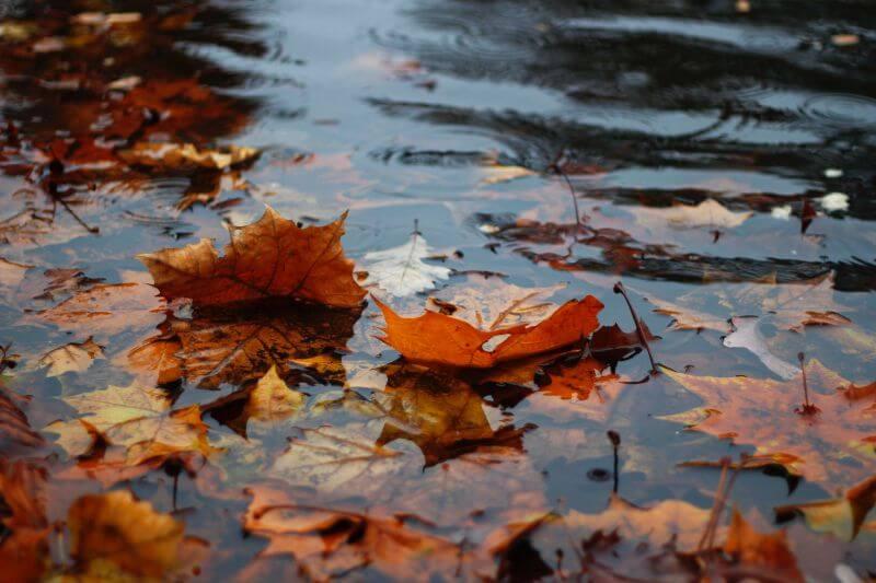 濡れた落ち葉