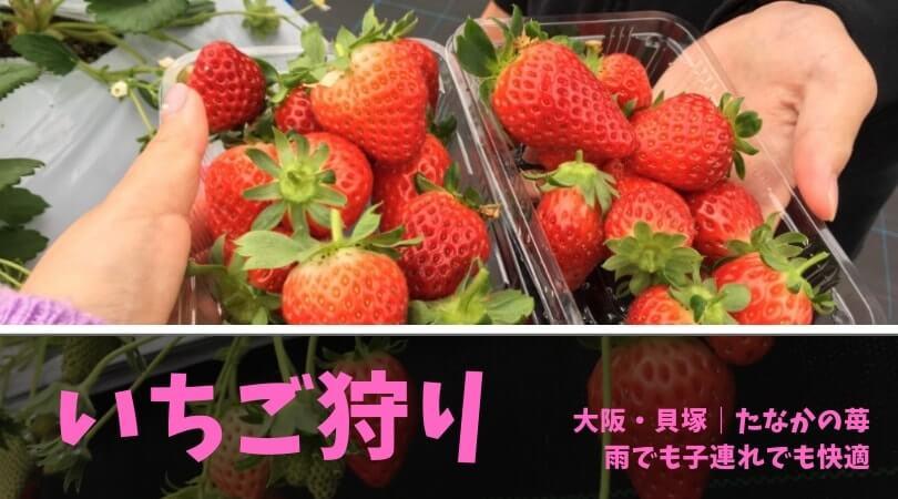 ichigogari-tanaka