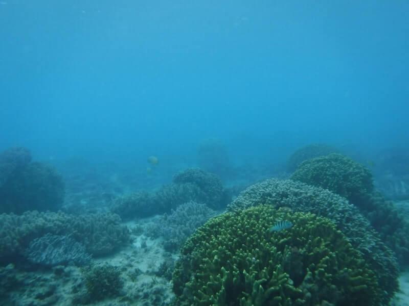 沖縄の海|体験ダイビング2
