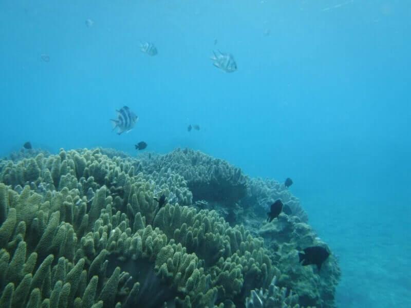 沖縄ダイビング|珊瑚礁の海
