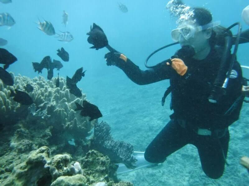 沖縄で体験ダイビング|餌付け中