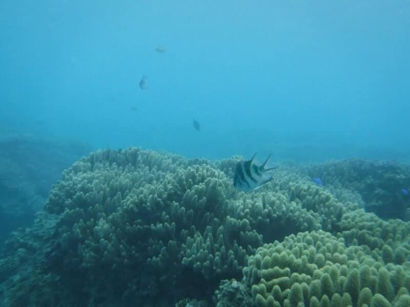 沖縄の海|体験ダイビング