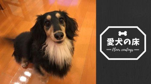 滑らないフロアコーティング「愛犬の床」|フローリングの負担からペットの足腰を守る