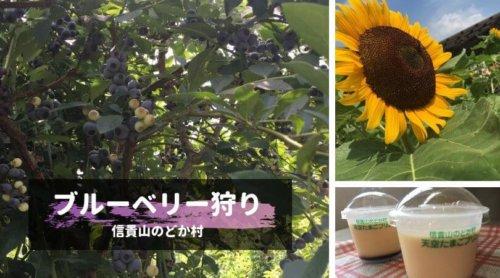 shigisan-nodokamura-blueberry