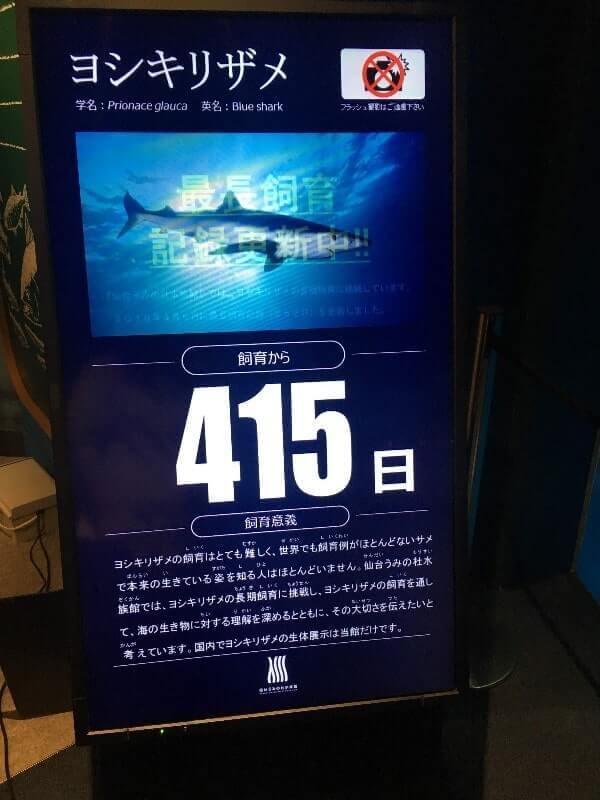 仙台うみの杜水族館|ヨシキリザメ飼育