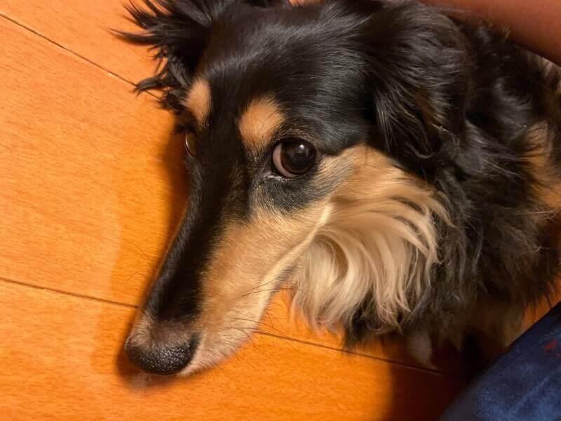 犬|iPhone11で撮影