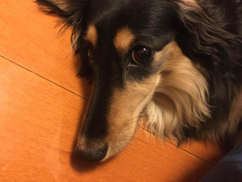 犬|iPhone6Sで撮影