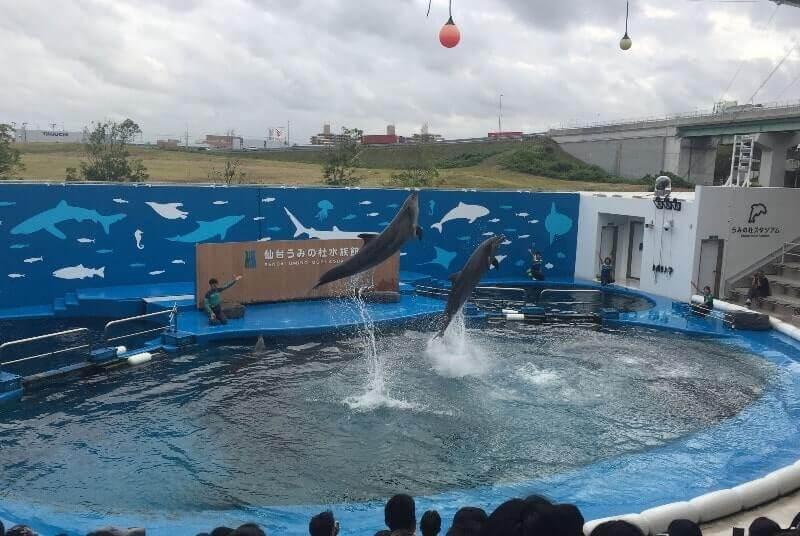 仙台うみの杜水族館|イルカショー