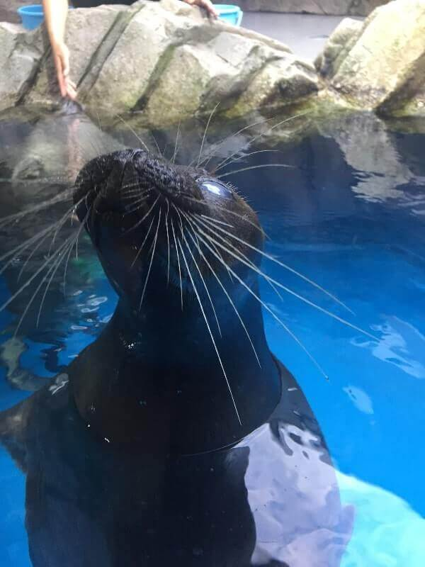 仙台うみの杜水族館|アザラシ