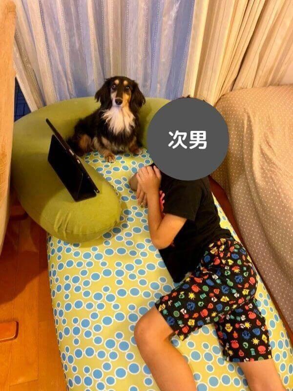 yogiboと次男と犬