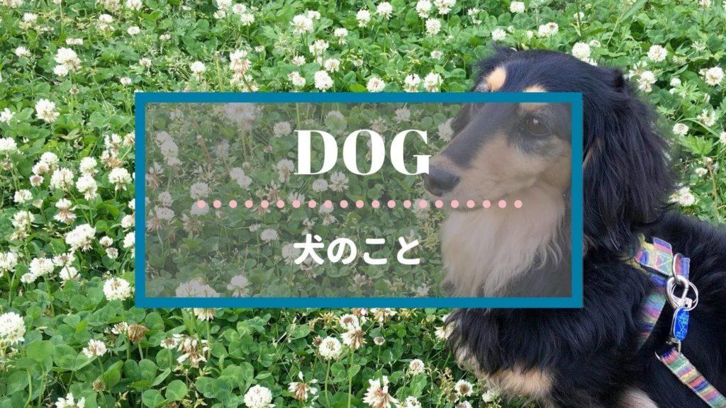 カテゴリー|犬のこと